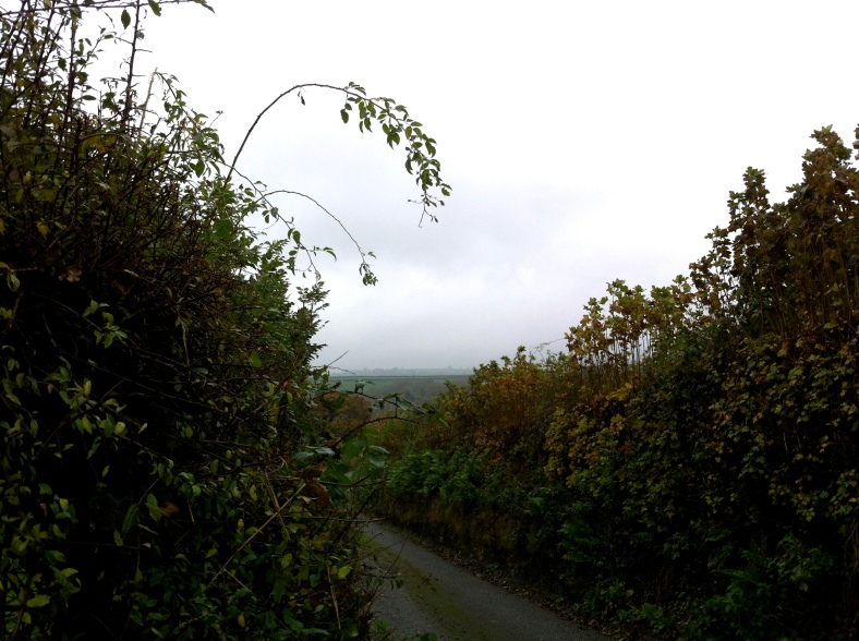 a Welsh hedgerow